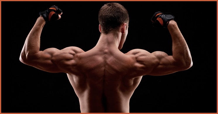 breite Schultern