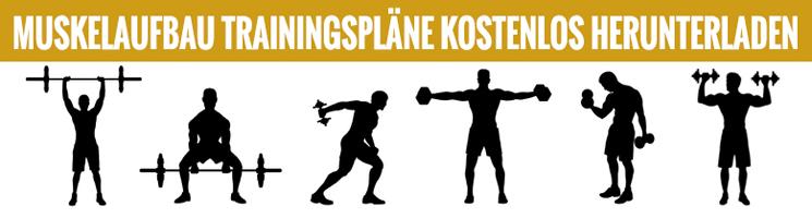 muskelaufbau trainingsplaene