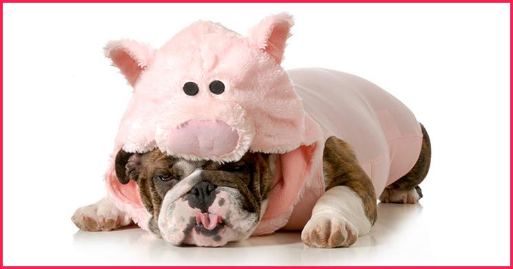 inneren Schweinehund überwinden
