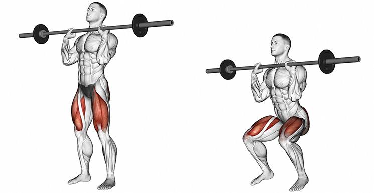 Kniebeugen trainierte Muskeln
