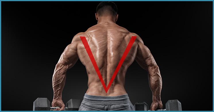 breiter Rücken