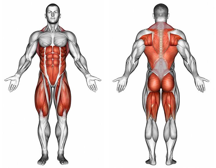Kreuzheben-diese-Muskeln-werden-trainiert