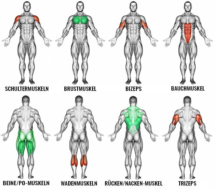 kleine und große Muskelgruppen